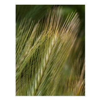 ear in the meadow postcards