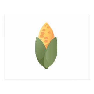 Ear Of Corn Postcard