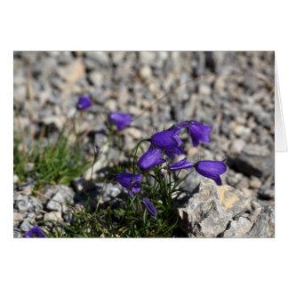 Earleaf bellflower (Campanula cochleariifolia) Card