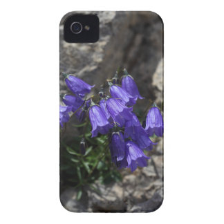 Earleaf bellflower (Campanula cochleariifolia) iPhone 4 Case