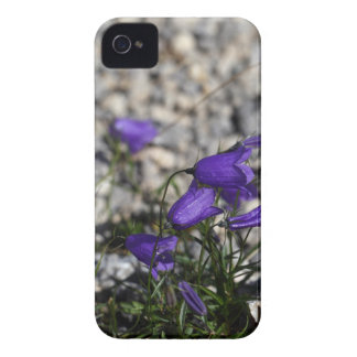 Earleaf bellflower (Campanula cochleariifolia) iPhone 4 Covers