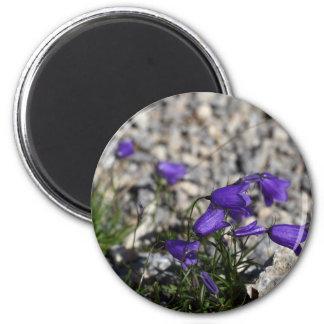 Earleaf bellflower (Campanula cochleariifolia) Magnet