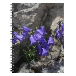 Earleaf bellflower (Campanula cochleariifolia) Notebook
