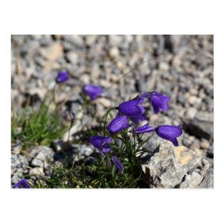 Earleaf bellflower (Campanula cochleariifolia) Postcard