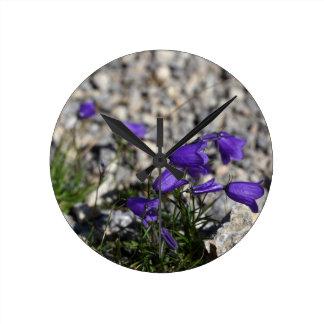 Earleaf bellflower (Campanula cochleariifolia) Round Clock