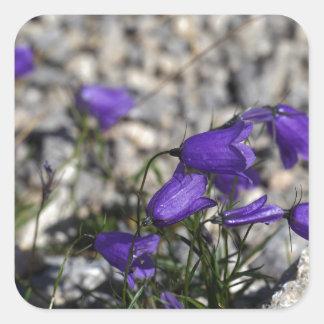 Earleaf bellflower (Campanula cochleariifolia) Square Sticker