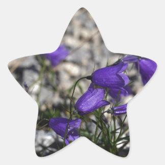 Earleaf bellflower (Campanula cochleariifolia) Star Sticker
