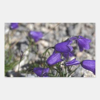 Earleaf bellflower (Campanula cochleariifolia) Sticker