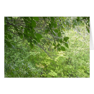Early Autumn Forest, greeting card, blank inside. Greeting Card