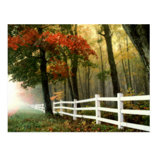 Early Autumn Morning Scenic Postcard