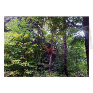 Early Autumn Tree in Woods-Blank Card