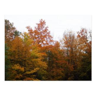 Early Autumn Tree Scene Postcard
