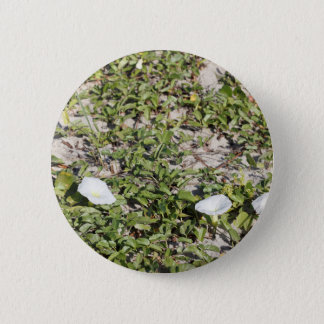 Early Beach Sand Morning Glories 2 Inch Round Button