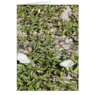 Early Beach Sand Morning Glories Card