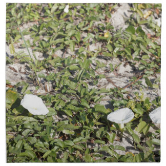 Early Beach Sand Morning Glories Napkin