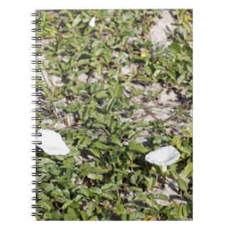 Early Beach Sand Morning Glories Notebooks