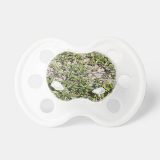 Early Beach Sand Morning Glories Pacifier