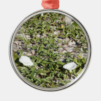 Early Beach Sand Morning Glories Silver-Colored Round Ornament