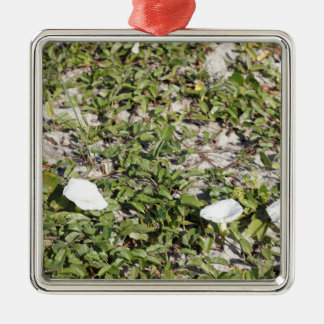 Early Beach Sand Morning Glories Silver-Colored Square Ornament