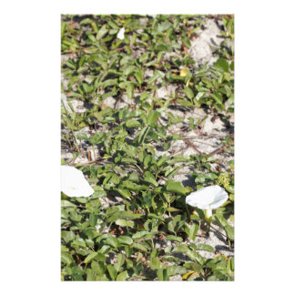 Early Beach Sand Morning Glories Stationery