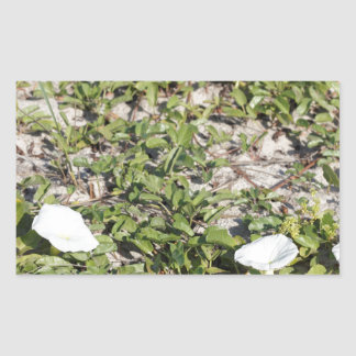 Early Beach Sand Morning Glories Sticker