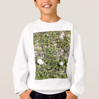 Early Beach Sand Morning Glories Sweatshirt
