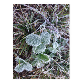 Early fall frost postcard