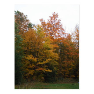 Early Morning Autumn Tree Scene Postcard