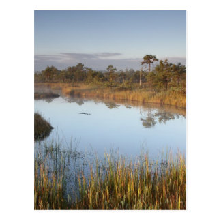 Early morning in Endla Nature Reserve Estonia Postcard