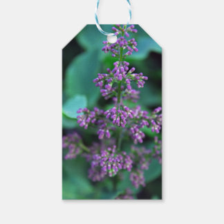 Early Morning Lilacs Gift Tags