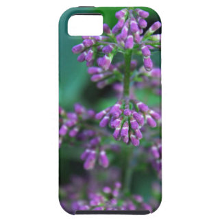Early Morning Lilacs iPhone 5 Cover