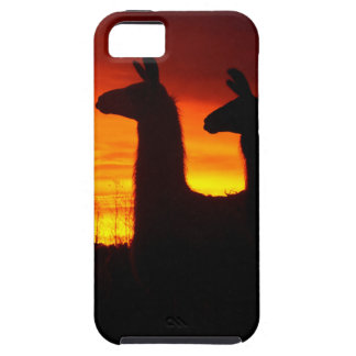 Early Morning Llamas iPhone 5 Cases