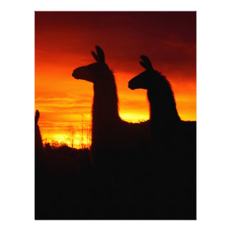 Early Morning Llamas Letterhead Template