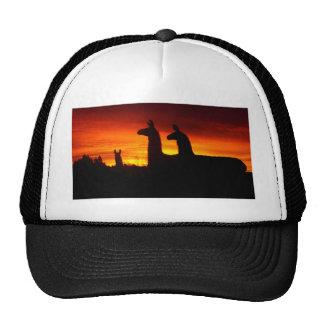 Early Morning Llamas Trucker Hat