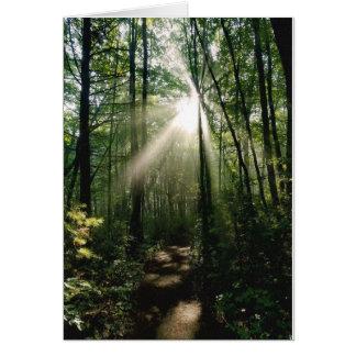 Early morning sun through woods card