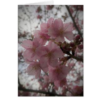 Early sakura blossoms card