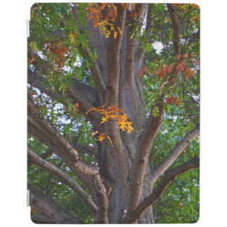 Early Shades of Autumn iPad Cover
