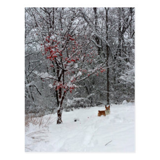 Early Snow: Corgi Postcard