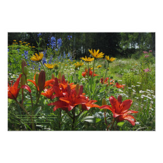 Early Summer Gardens, Burnt Orange Asiatic Lilies Poster