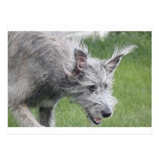 ears in motion postcard