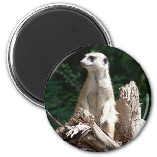 Earth male 2 inch round magnet