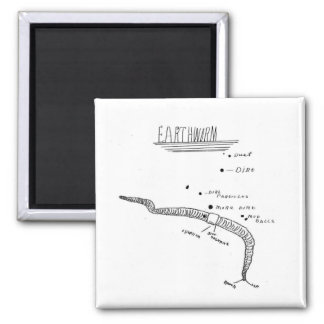 earthworm anatomy magnet