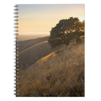 East Bay Hills in Summer Notebook