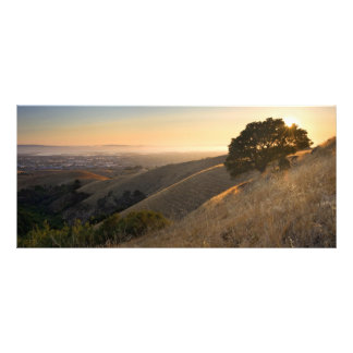 East Bay Hills in Summer Rack Card