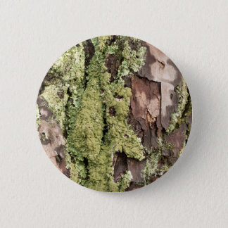 East Coast Pine Tree Bark Wet From Rain with Moss 2 Inch Round Button