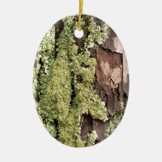 East Coast Pine Tree Bark Wet From Rain with Moss Ceramic Oval Ornament