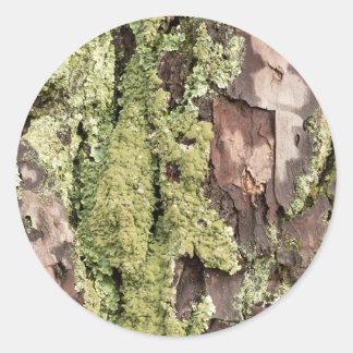 East Coast Pine Tree Bark Wet From Rain with Moss Classic Round Sticker