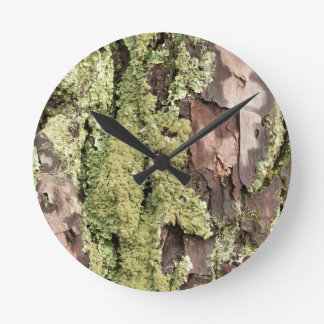 East Coast Pine Tree Bark Wet From Rain with Moss Clocks