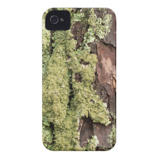 East Coast Pine Tree Bark Wet From Rain with Moss iPhone 4 Covers