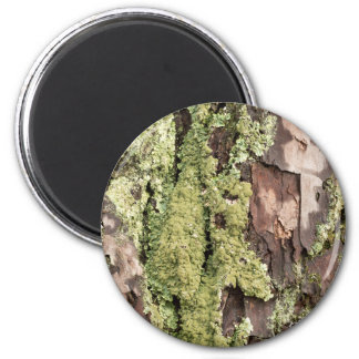 East Coast Pine Tree Bark Wet From Rain with Moss Magnet